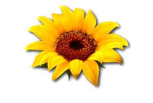 Flowersthumb.jpg